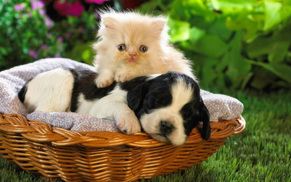 cat hugging dog