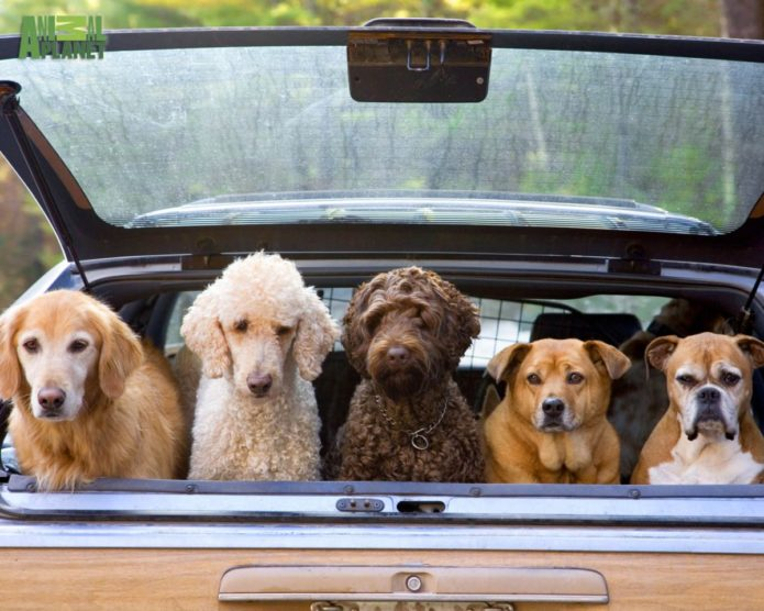 dogs-in-car_1200